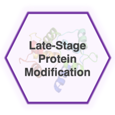protein_modification
