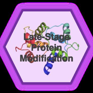 protein_modification